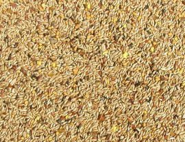 Abba 3700 Canary Seed