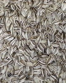 California Grey Striped Sunflower Seed